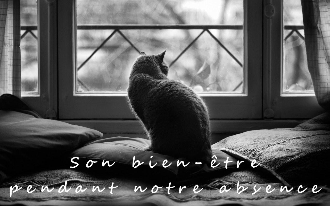 Chat devant fenetre noir blanc