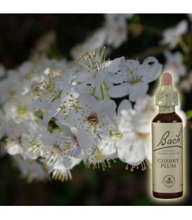 Cherry plum prunus fleurs de bach