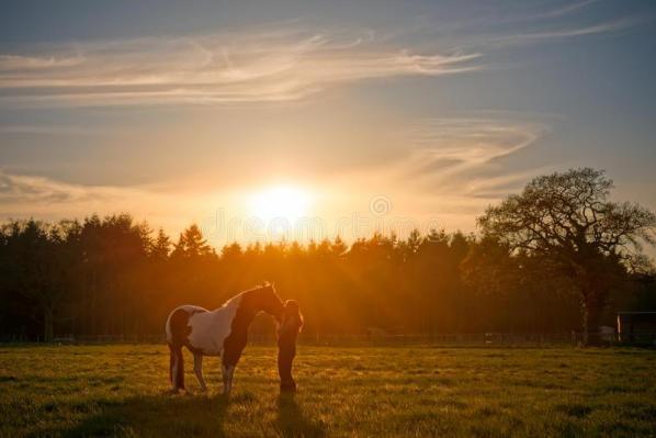 Cheval de caresse de fille au coucher du soleil 63915587