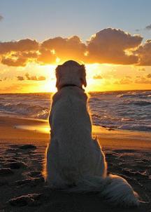 Chien devant coucher de soleil