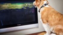 Dog tv 1 5133410