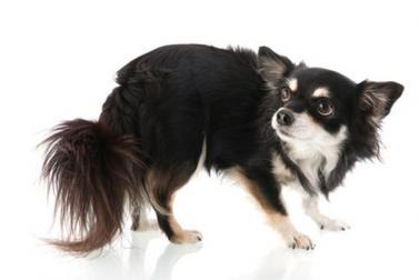 Http www eduquersonchien com wp content uploads 2012 09 chien craintif
