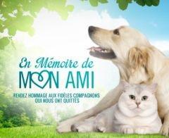 Santevet en memoire de mon ami fr un lieu virtuel pour aider les maitres a surmonter la perte de leur chien ou chat s