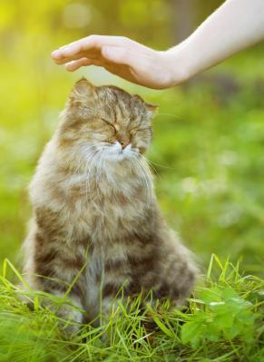 Soins energetiques sur les chats chiens cheval reiki